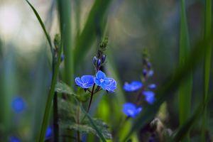 Фото бесплатно трава, цветы, растения, флора, макро