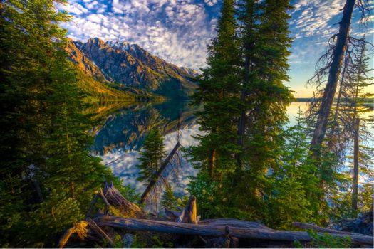 Фото бесплатно отражение, пейзаж, деревья