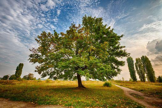 Фото бесплатно осенние листья, пейзаж, небо