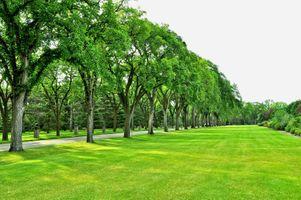 Заставки поле, газон, парк