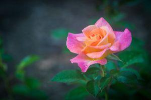 Заставки цветение, макро, цветок
