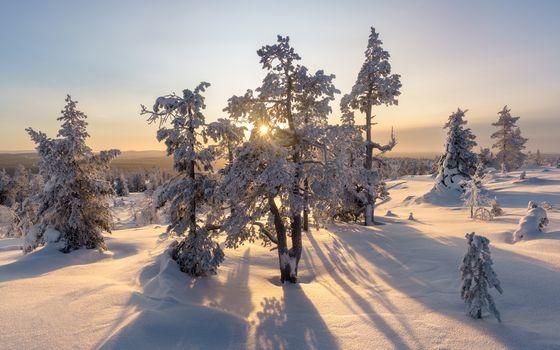 Бесплатные фото зима,закат,снег,деревья,сугробы,природа,пейзаж