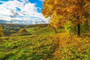 Фото бесплатно осенние листья, осень в москве, природа