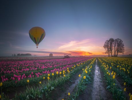 Заставки туман, пейзаж, тюльпаны