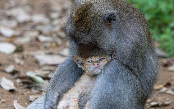 Photo free kitty, monkey, love