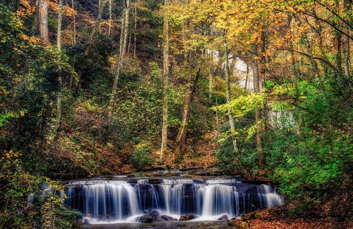 Фото бесплатно осенняя пора, осень, лес - на рабочий стол
