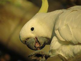 Фото бесплатно попугай, белый, птицы