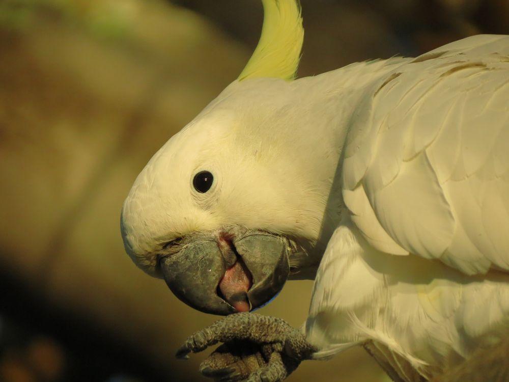 Обои попугай, белый, птицы картинки на телефон