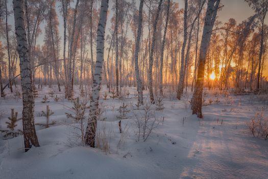 Заставки закат,зима,лес,берёзы,снег,сугробы,деревья,пейзаж