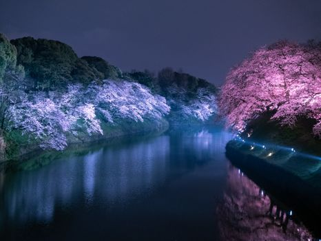 Фото бесплатно Chidorigafuchi, Tokyo, Japan