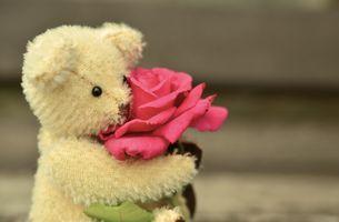 Фото бесплатно цветок, милый, медведь