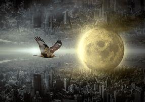 Фото бесплатно фантазия, город, луна, ястреб, настроение, здание, сюрреалистический, света, таинственный, атмосфера, фантастический, архитектуры, мистический, фотомонтаж, составление, сон, магия, волшебный, темный, летающий, мрачный, пылать, драматический, воздух