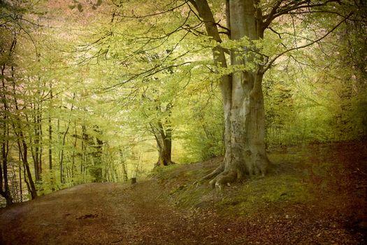 Бесплатные фото лес,весна,листва,деревья,природа,парк,ветви