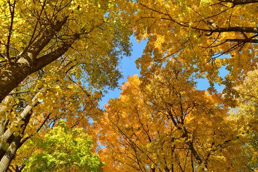 Заставки Осень,город,парк,деревья,листопад