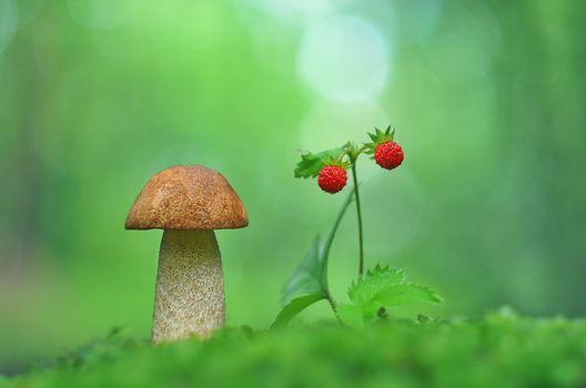 Бесплатные фото подосиновик,земляника,гриб,ягода,макро