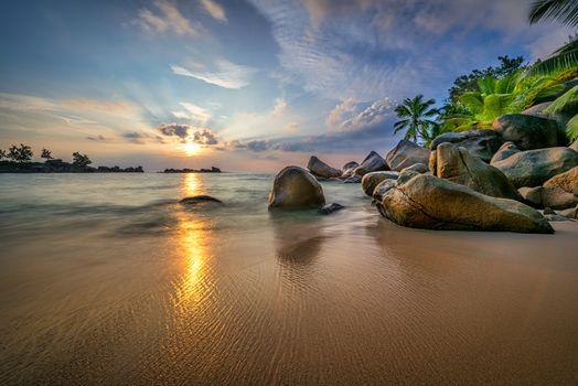 Photo free sea, shore, palm trees