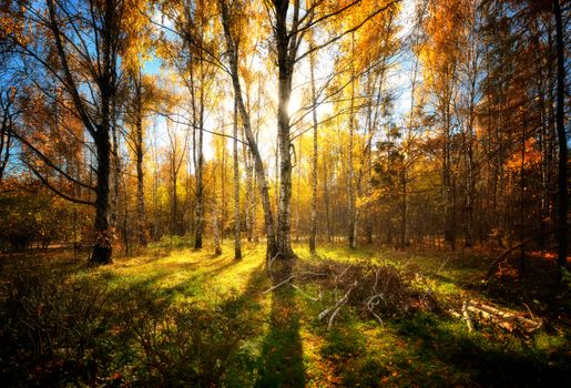 Photo free autumn, forest, fall leaves