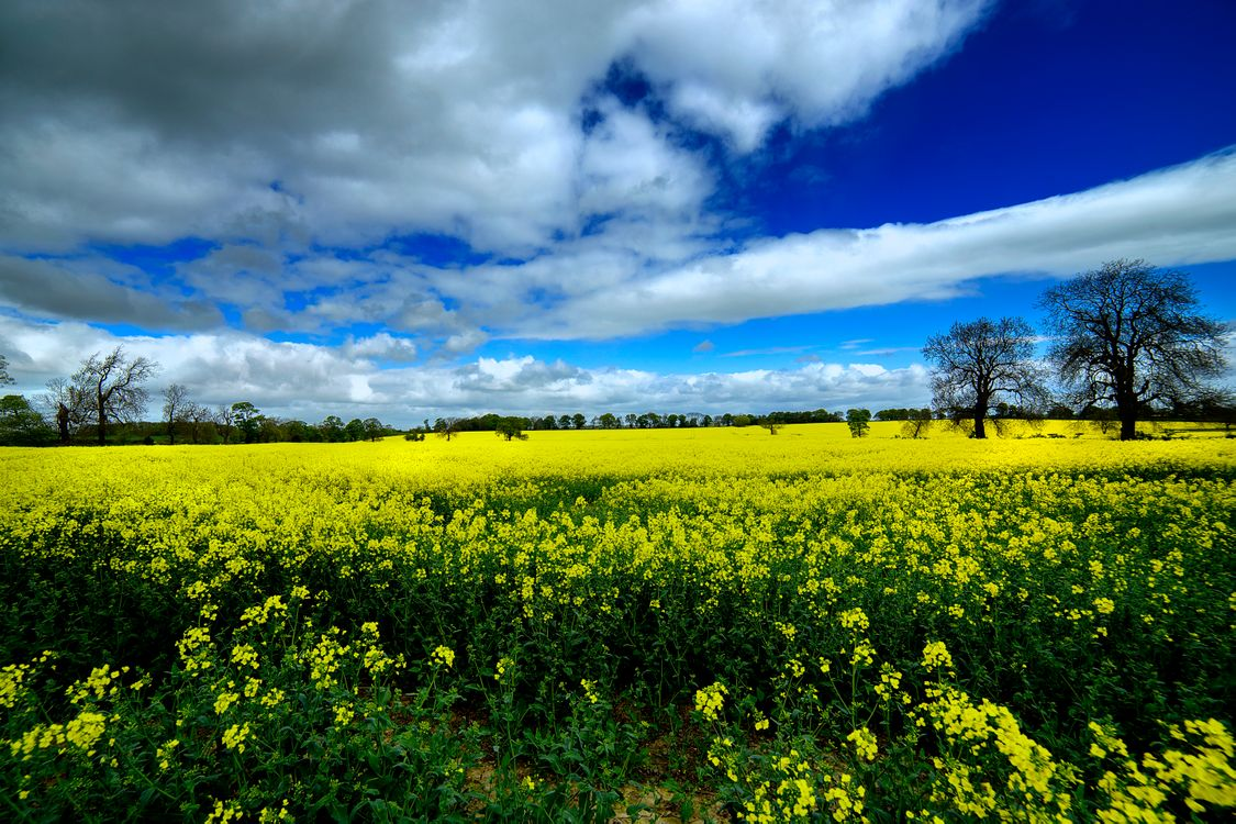 Поле из желтых цветов · бесплатное фото
