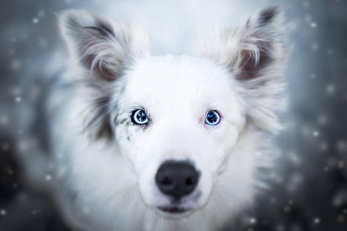 Зимняя аусси · бесплатная заставка