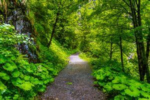 Заставки Бад-Гаштайн,солнечный день,Австрия,Bad Gastein,лес,деревья,дорога