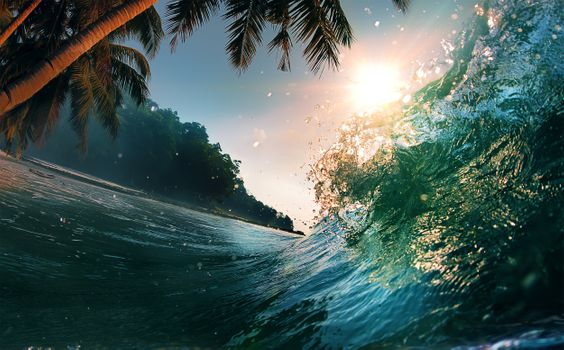 Photo free palm trees, waves, ocean