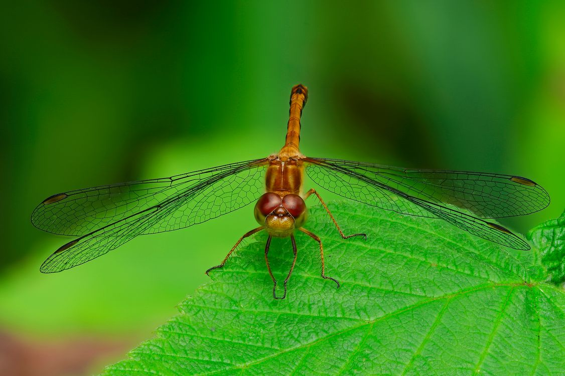 Photos for free dragonfly, grass, macro - to the desktop
