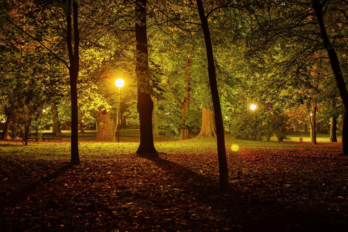Фото бесплатно пейзаж, парк, освещение - на рабочий стол