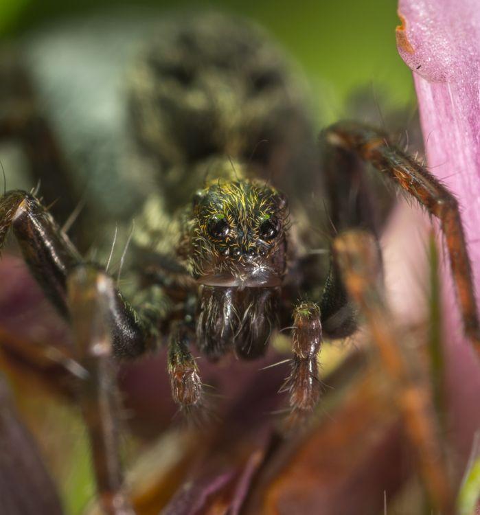 Фото паук паукообразный портрет - бесплатные картинки на Fonwall