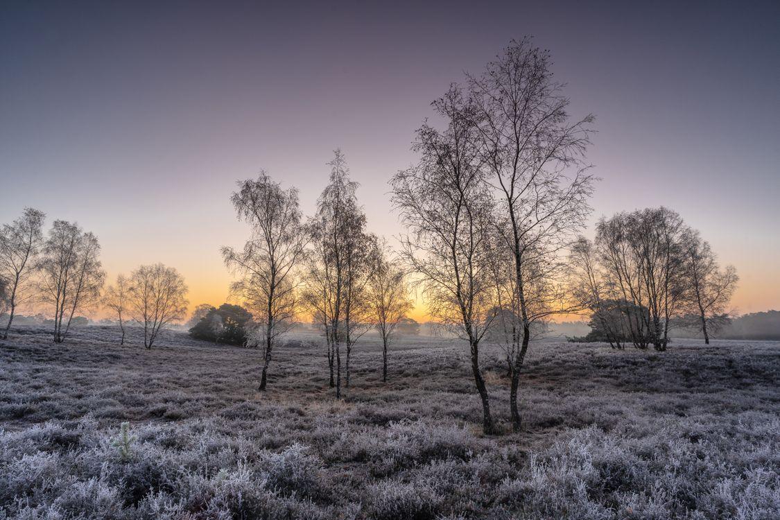 Фото бесплатно деревья, природа, трава - на рабочий стол