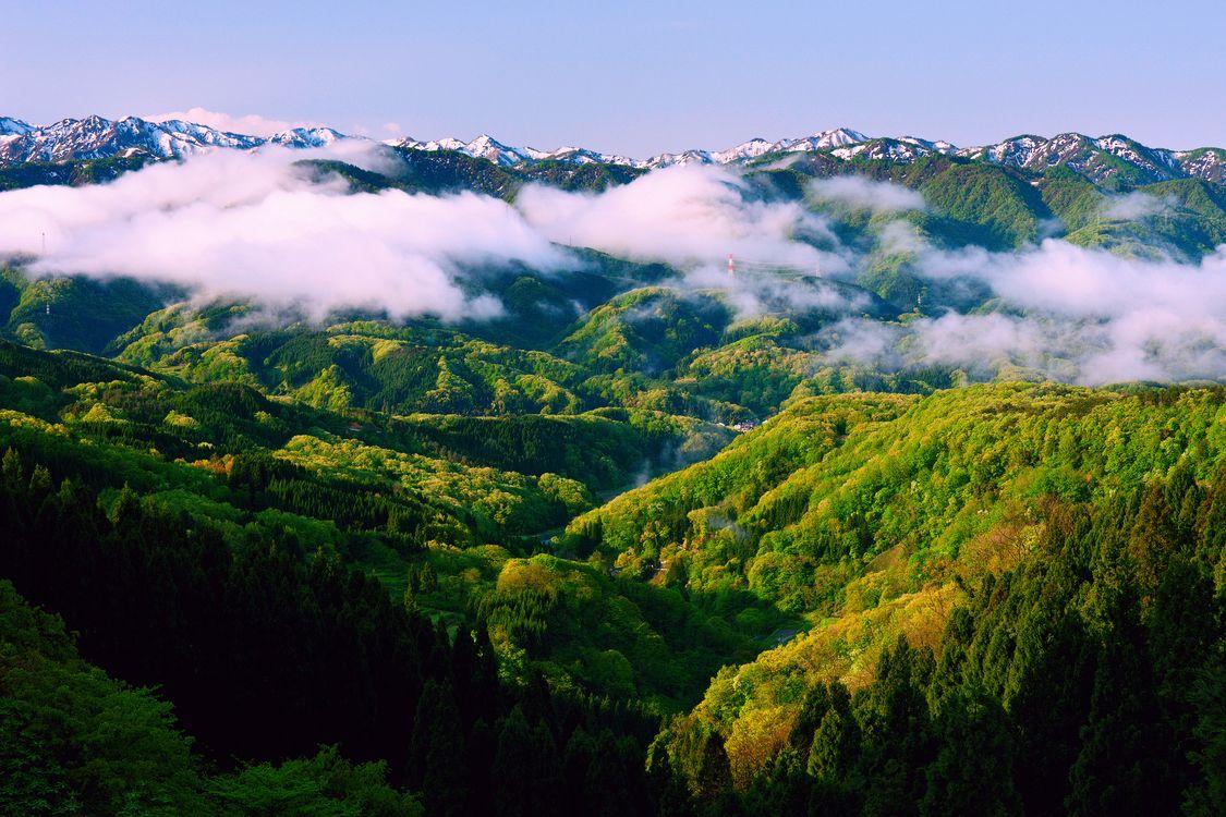 Фото бесплатно туман, деревья, пейзажи - на рабочий стол