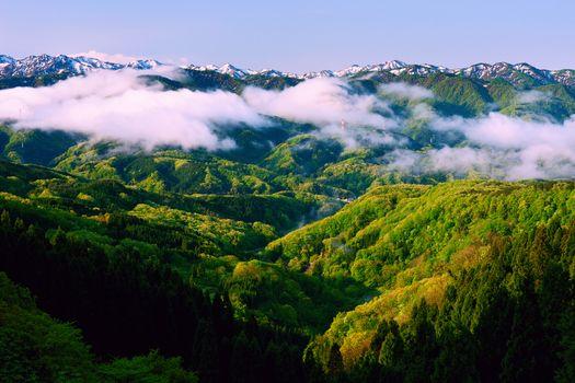Заставки туман, деревья, пейзажи