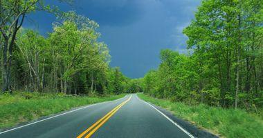 Фото бесплатно дорожка, пейзаж, лес