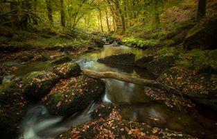 Заставки деревья мох река природа, река, ручей