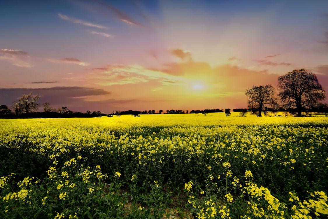 Фото бесплатно поле, закат, цветы - на рабочий стол