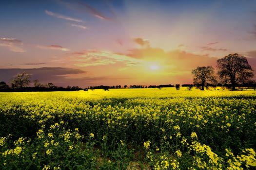 Бесплатные фото поле,закат,цветы,деревья,природа,пейзаж