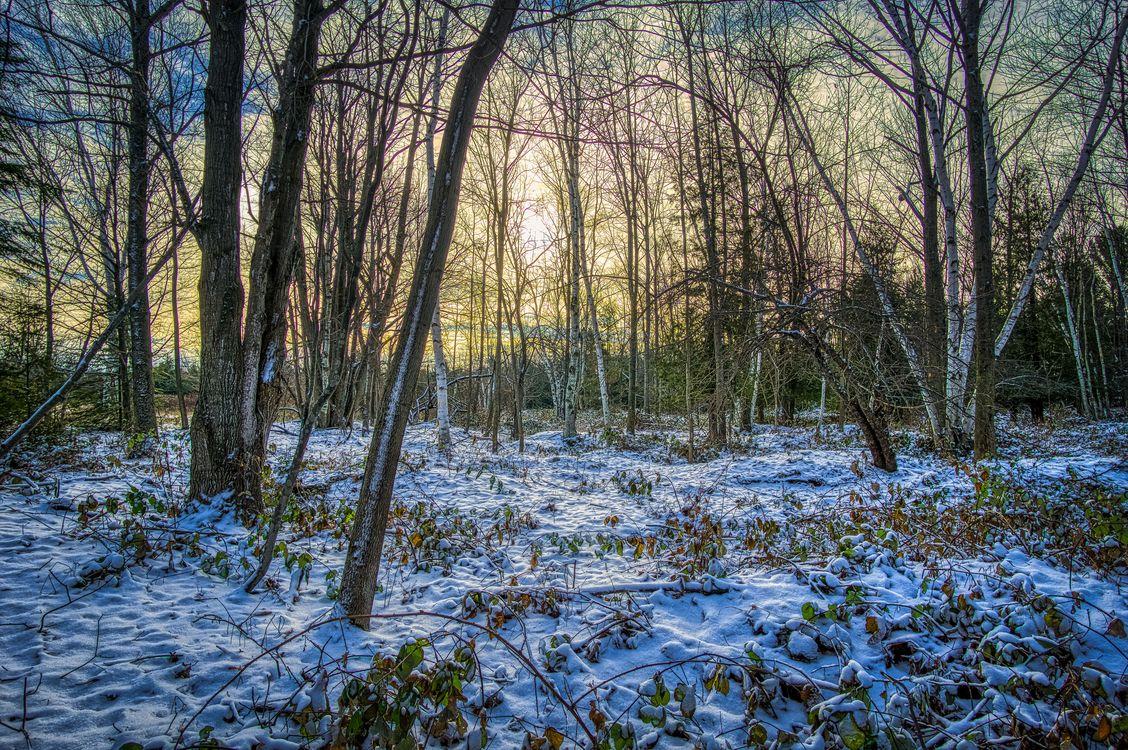 Фото бесплатно зимняя осень, осенняя зима, лес, снег, деревья, закат, природа, пейзаж, пейзажи