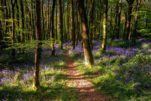 Тропинка в цветущем лесу · бесплатное фото