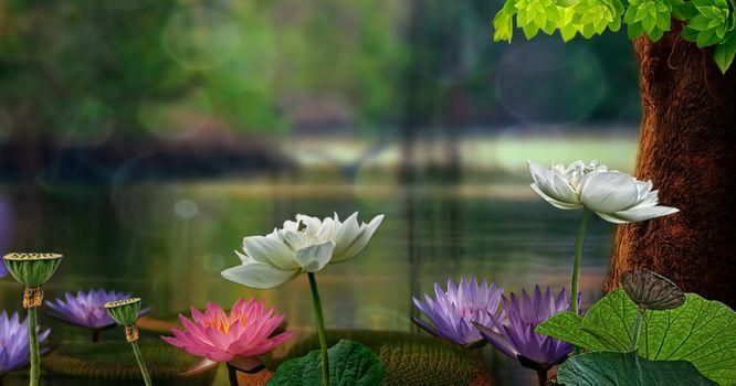 Photo free Lotus, Lotus water Lily, panoramic