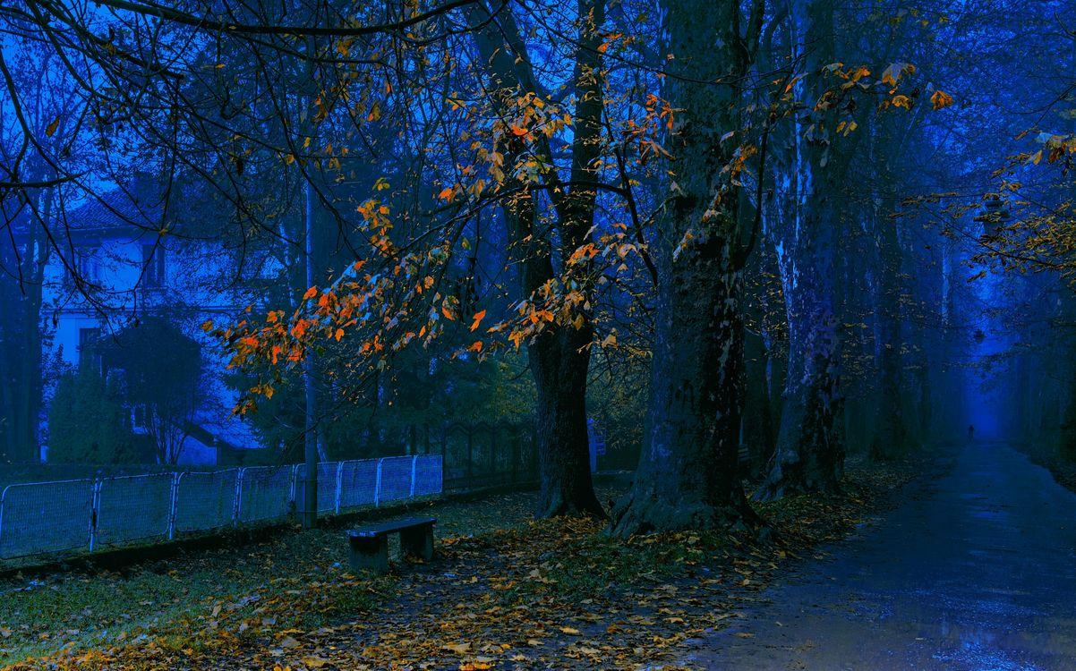 Фото бесплатно ночь, осень, сумерки, улица, дорога, дом, деревья, аллея, лавочка, пейзаж, пейзажи