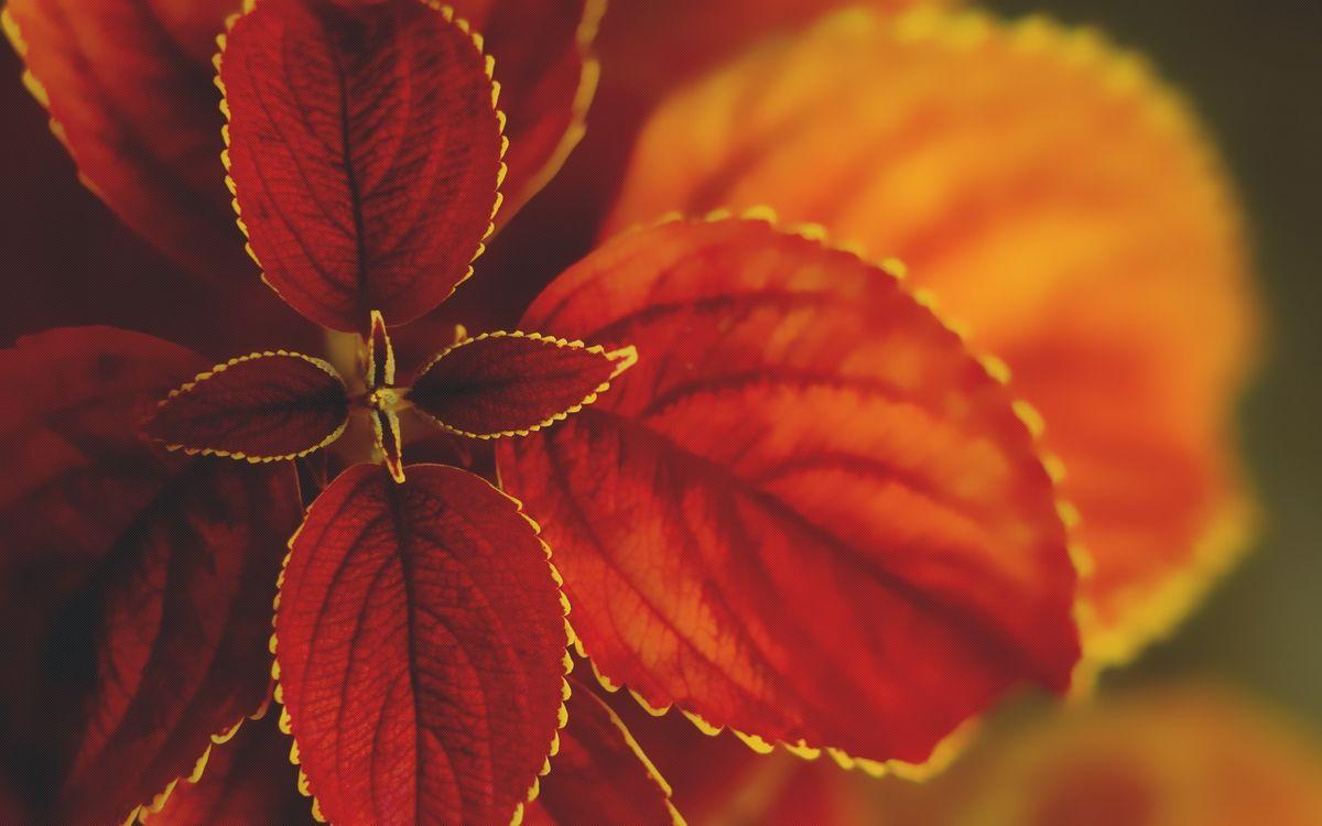 Фото бесплатно оранжевые листья, цветение, макро, цветы - скачать на рабочий стол