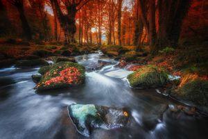 Фото бесплатно лес, осенние листья, река