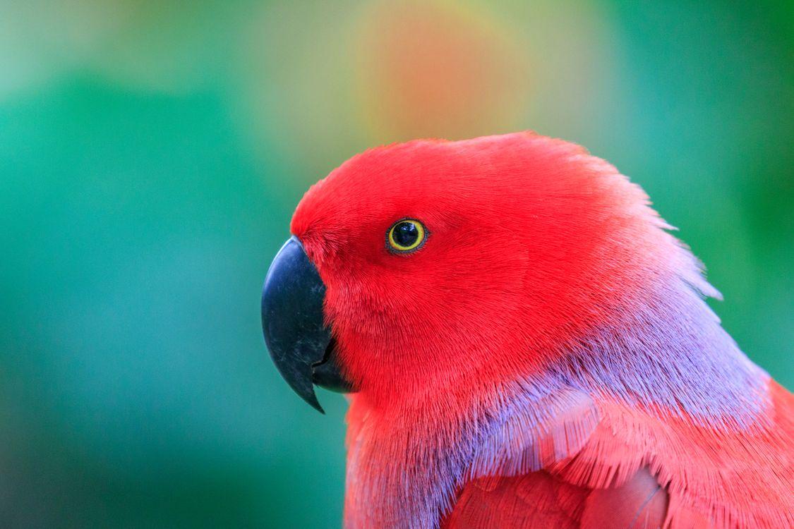 Фото бесплатно попугай, оперение, клюв - на рабочий стол