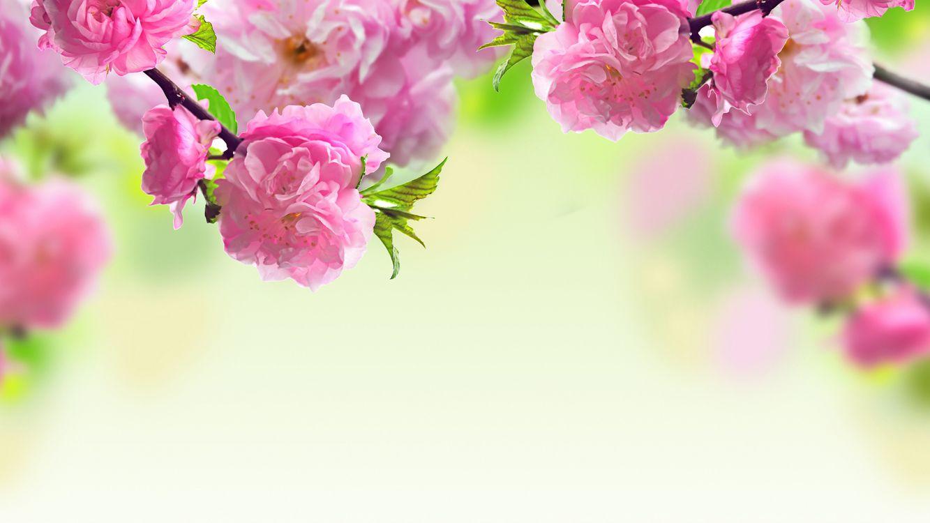 Обои цветы, розовый, макро картинки на телефон