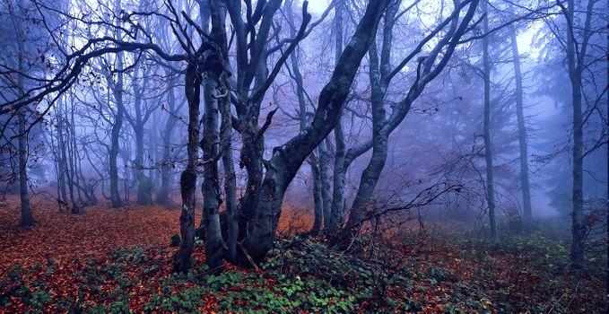 Заставки лес деревья,туман,осень,рассвет,утро,пейзаж,art