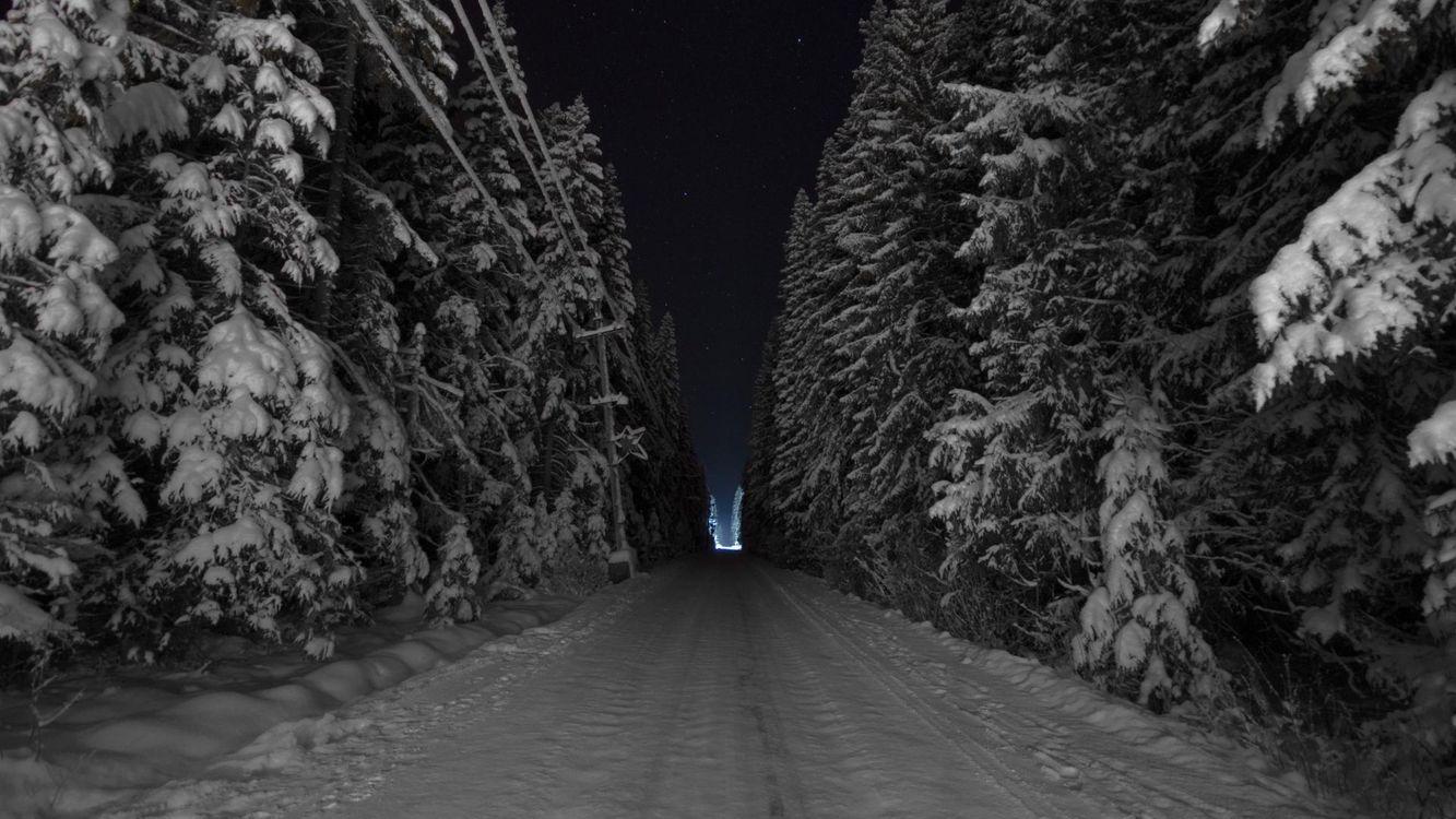 Фото бесплатно зимняя дорога, сугробы, лес, ночь, деревья в снегу, холод, мороз, темный лес, природа