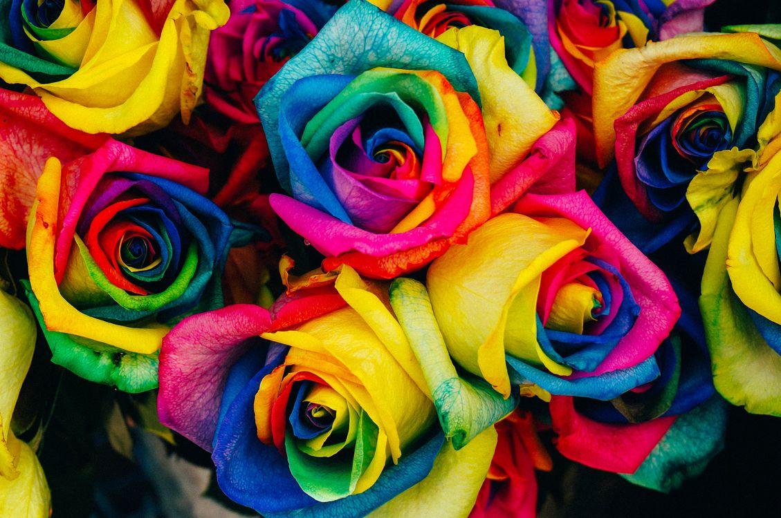 Букет разноцветных роз с цветами радуги · бесплатное фото