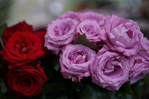Фото бесплатно розы, разноцветные, букет