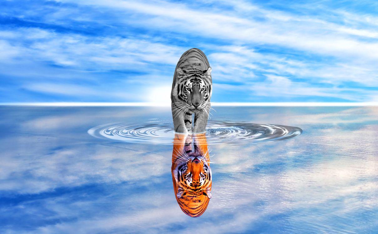 Фото бесплатно тигр, кошка, хищник, животные, опасный, природа, млекопитающее, кошачий, живая природа, дикая кошка, цифровая манипуляция, фото искусство, фотошоп отражение, рендеринг