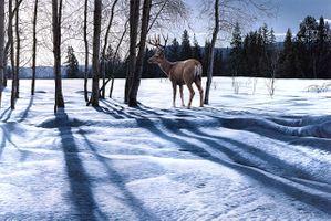 Бесплатные фото зима,олень,лес,деревья,природа,пейзаж,изобразительное искусство