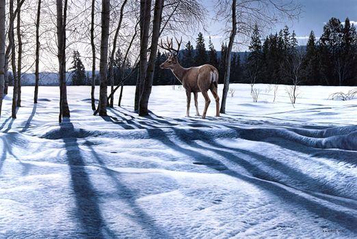 Бесплатные фото зима,олень,лес,деревья,природа,пейзаж,изобразительное искусство,картина